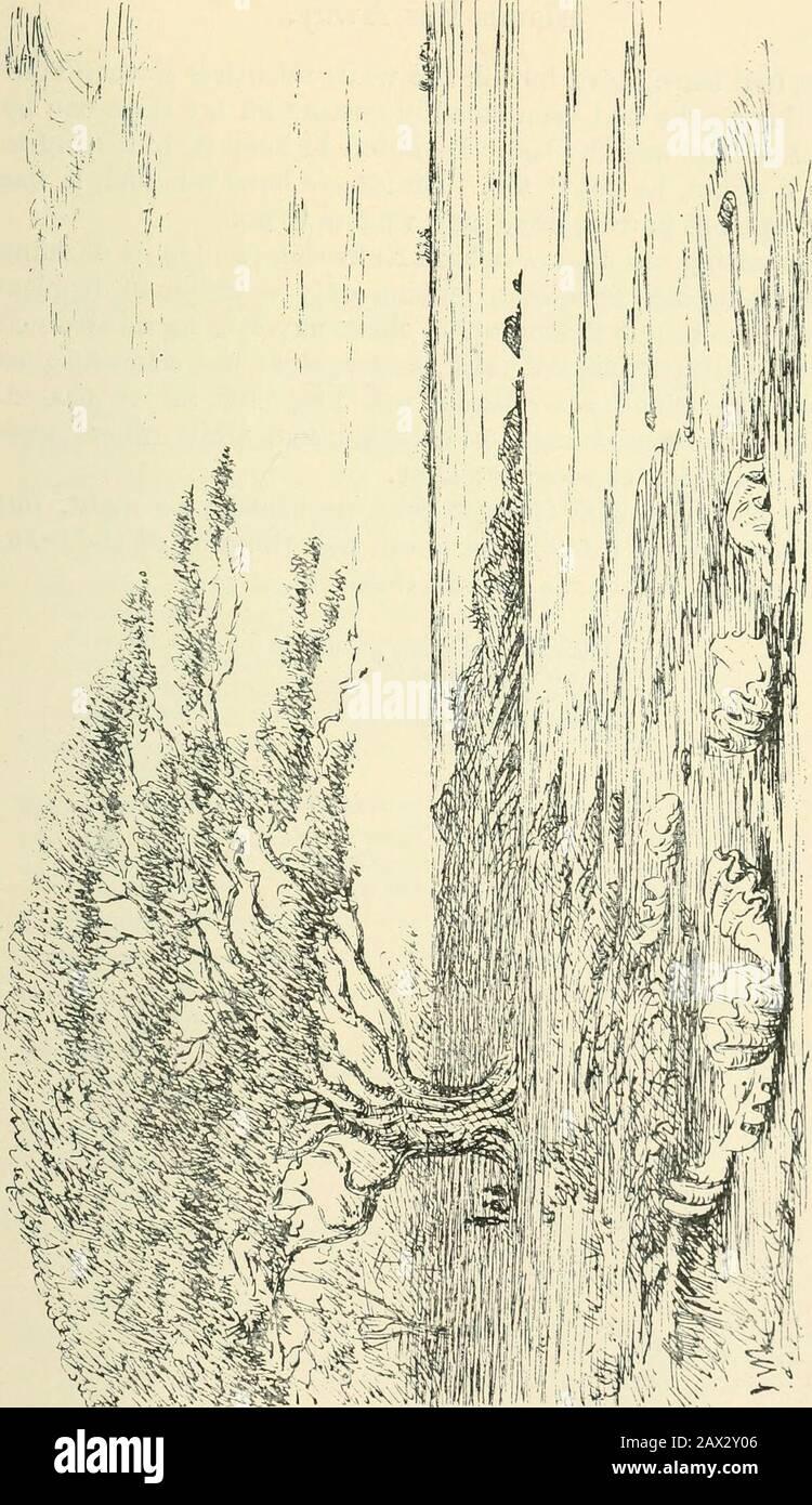 Husby-Lnghundra