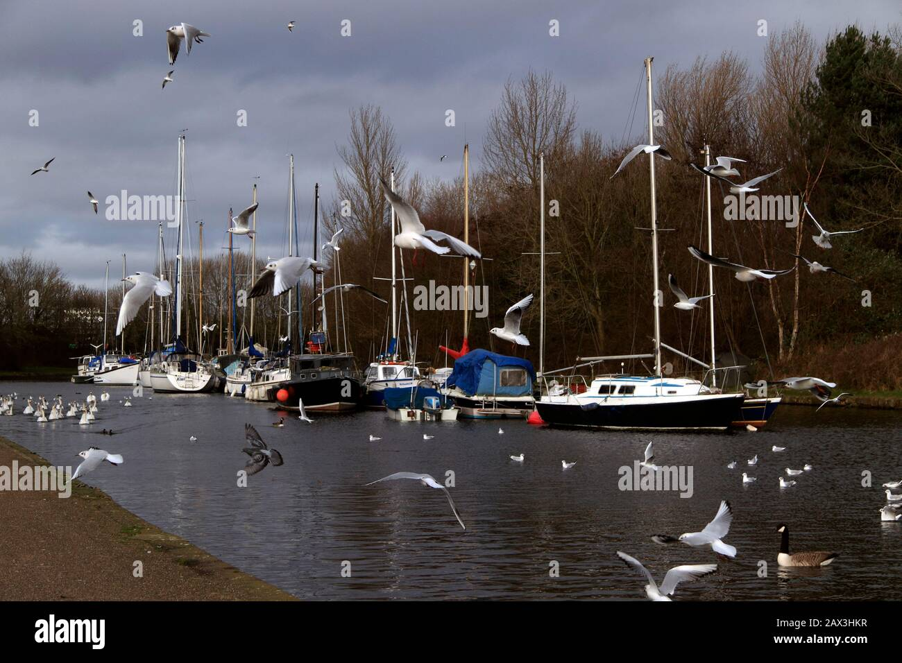 Feeding the birds on the Sankey (St Helens) Canal, Spike Island, Widnes, Cheshire, UK Stock Photo