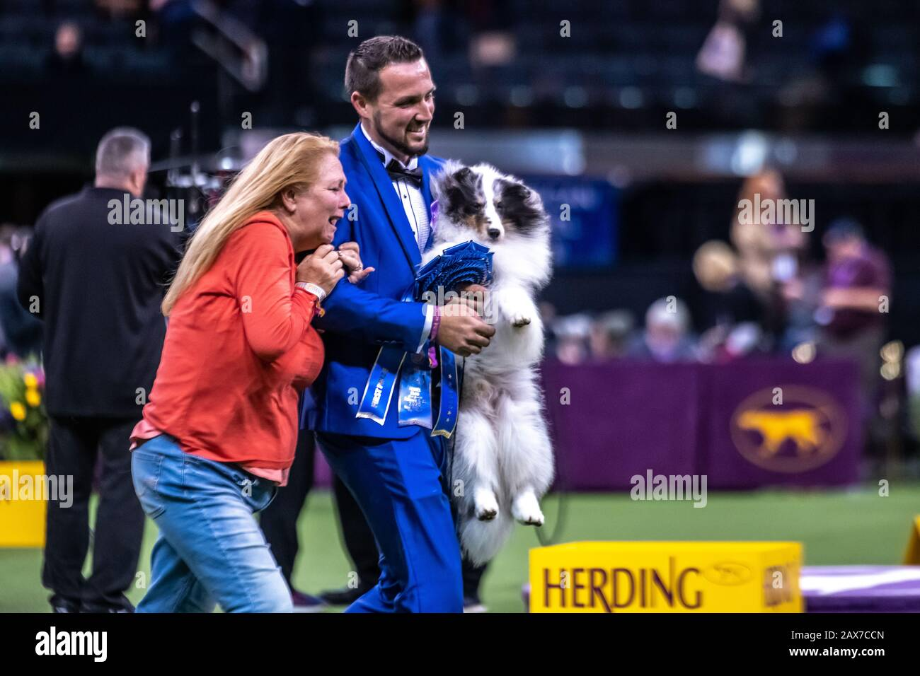 New York, USA. 10th Feb, 2020. Handler and co-owner Tyler Crady holds Conrad the Shetland sheepdog as his mother Erin Tyler reaches to congratulate him after winning the Herding group category at the 144th Westminster Kennel Club Dog show in New York city's Madison Square Garden. Conrad's formal competition name is Syringa-Akadia The Corsair.  Credit: Enrique Shore/Alamy Live News Stock Photo