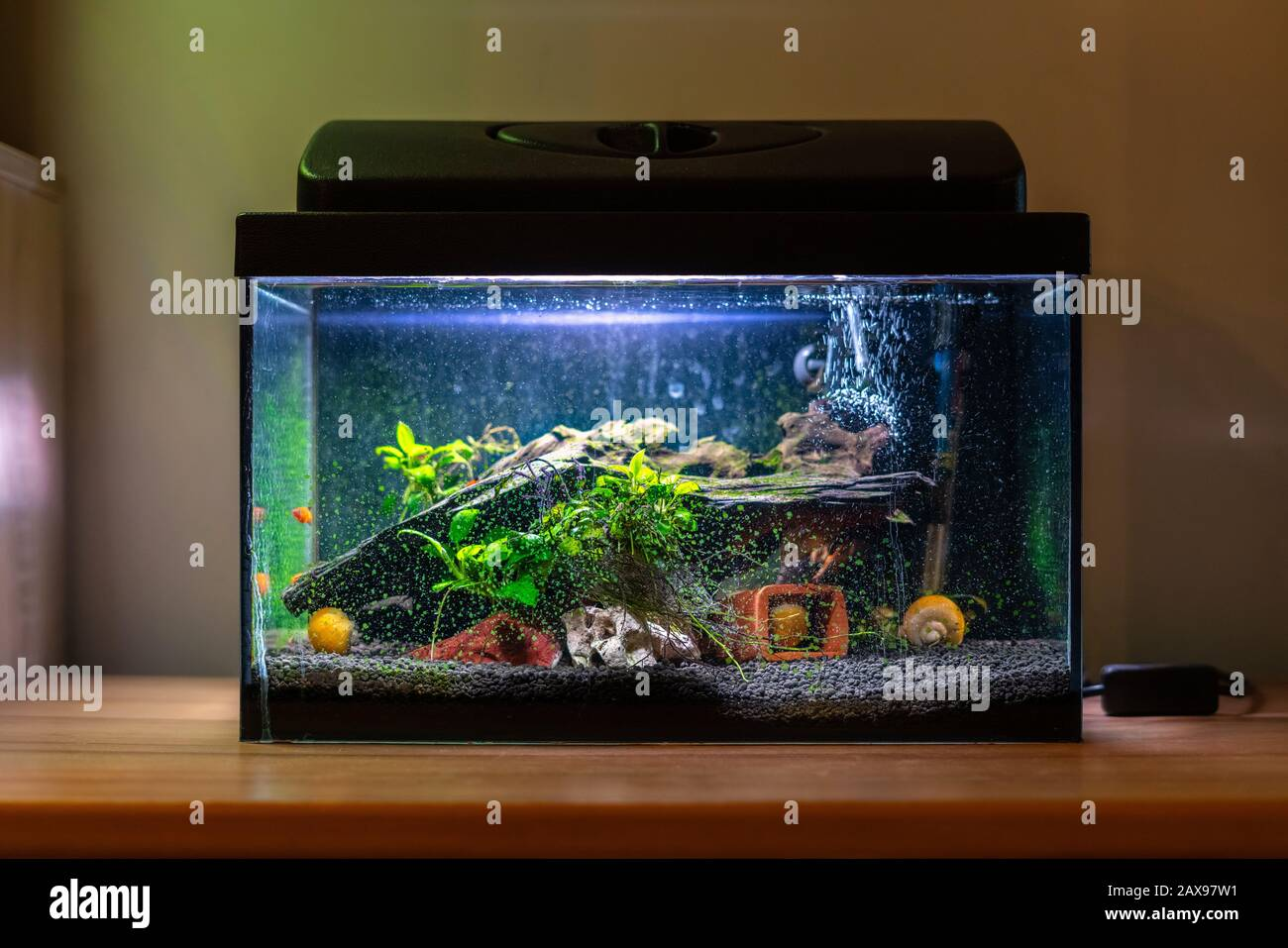 Small Fish Tank High Resolution Stock Photography And Images Alamy