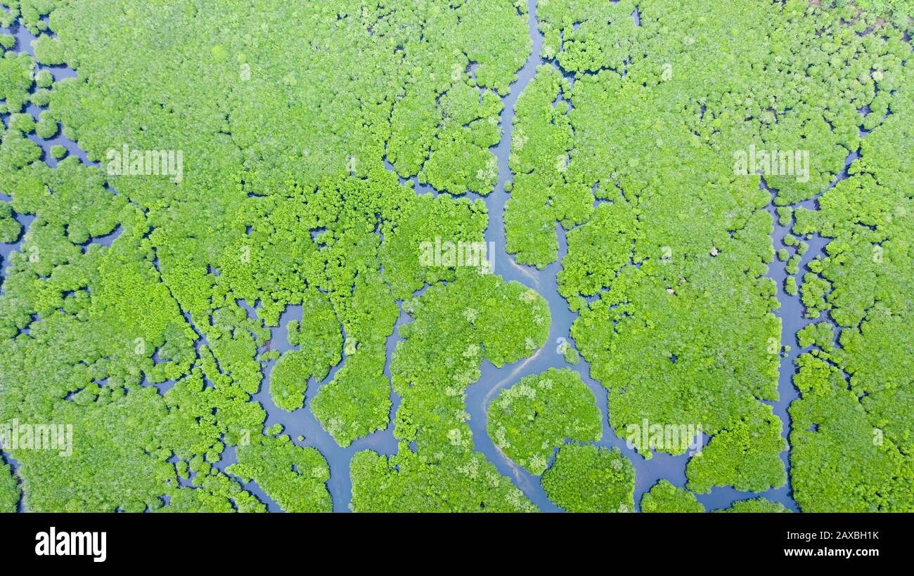 Mangrove forests and rivers, top view. Tropical background of mangrove trees. Philippine nature. Stock Photo