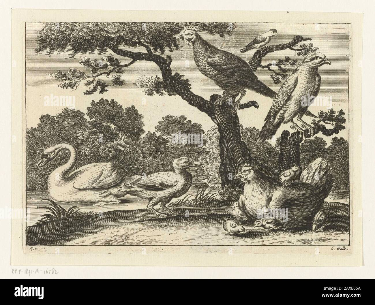 """""""Zwaan, kip met kuikens en andere vogels; Landschap met zwemmende zwaan, een kip omringd door kuikens, en andere vogels.; Iconclasscode: 25F3; Iconclasscode: 25F36(SWAN); Iconclasscode: 25F38(TURKEY); Iconclasscode: 34B232; print; 1654 - 1678; 1654 - 1678; """" Stock Photo"""