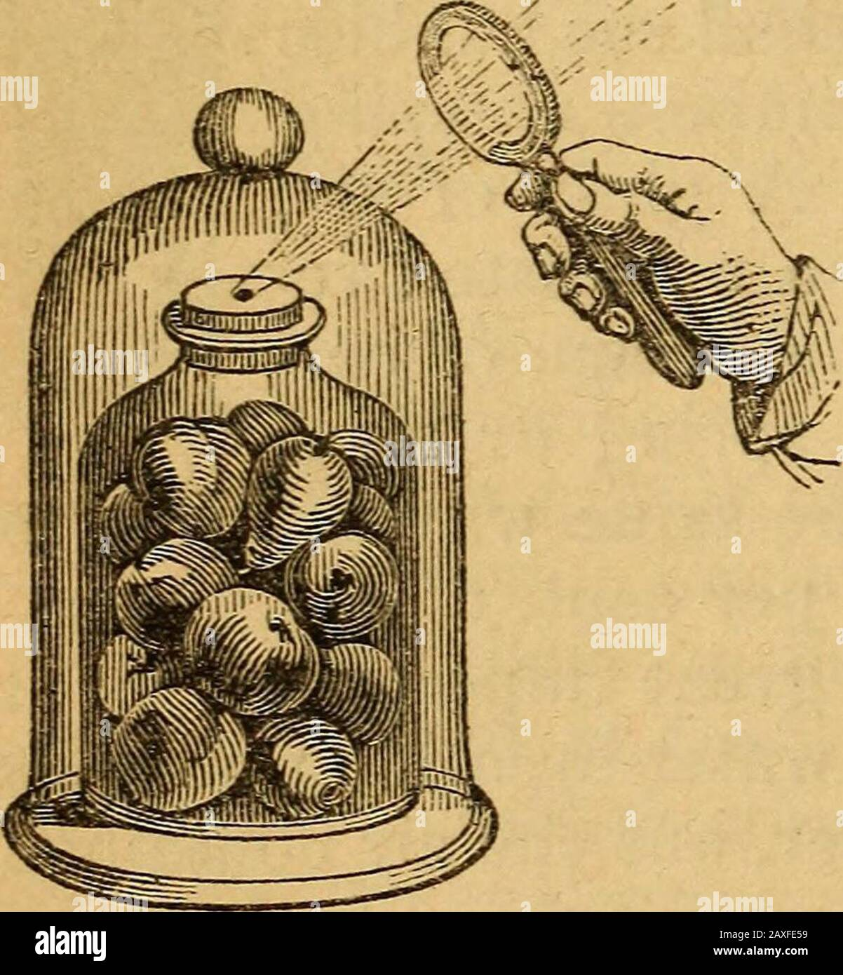 A text-book on chemistryFor the use of schools and colleges . rated inFig. 230. The fruits are placedin a jar, closed by a soundcork covered with sealing-wax. A small hole is madethrough the cork, and the airexhausted. When the vacu-um is as complete as may be,the hole is closed by meltingthe wax in a converging beamof sunlight. On the largescale, the things to be pre-served are inclosed in tin cans, which are sealed by sol-dering, except a pinhole that is left through the cover.The tins are immersed in boiling water, and when steamissues from the pin-hole it is closed by a drop of meltedsolde Stock Photo