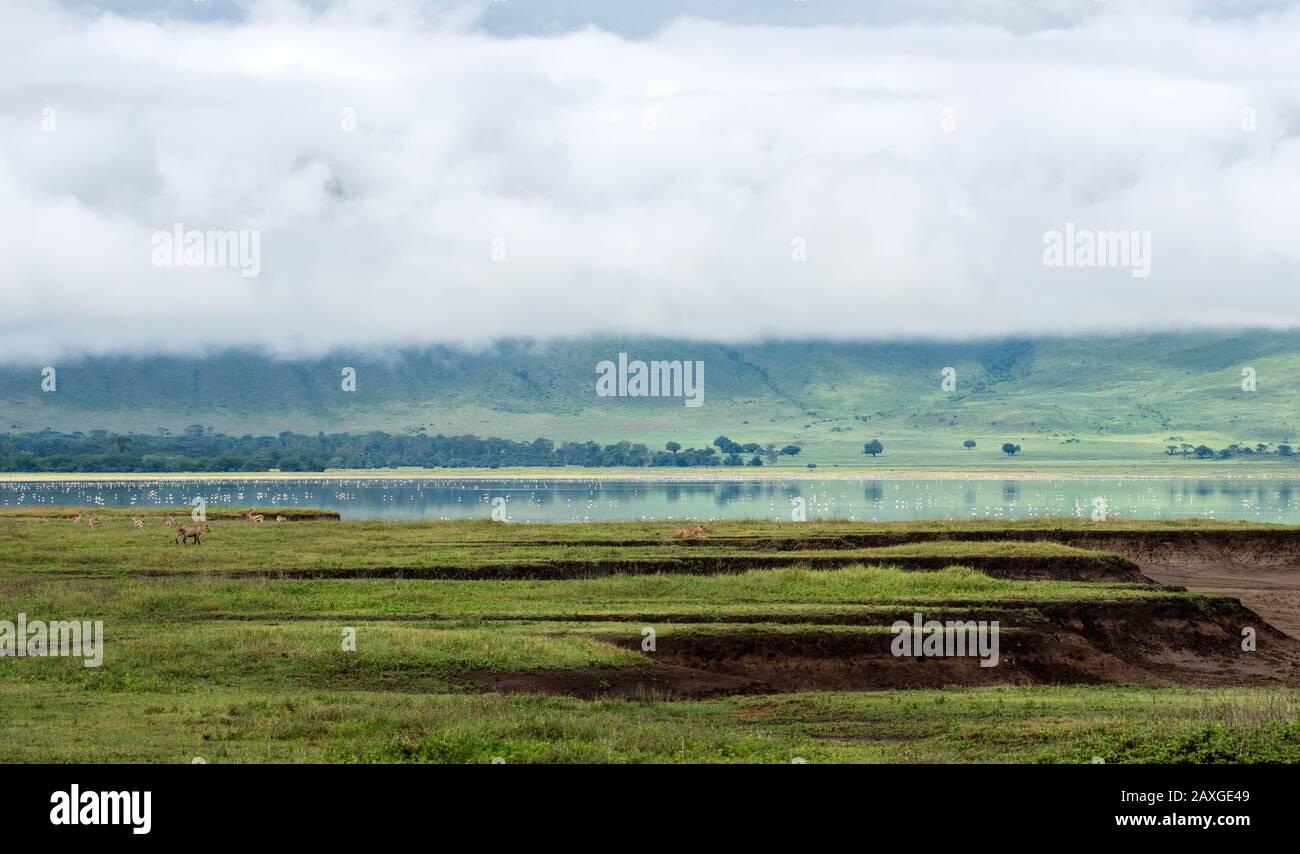 The landscape of the beautiful world heritage listed Ngorongoro Crater Conservation area. Stock Photo