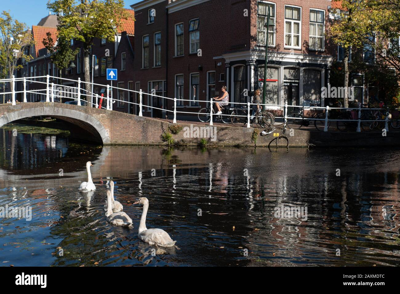 In a typical Dutch scene, young swans follow one of their parents on a canal, Delft, Netherlands. Stock Photo