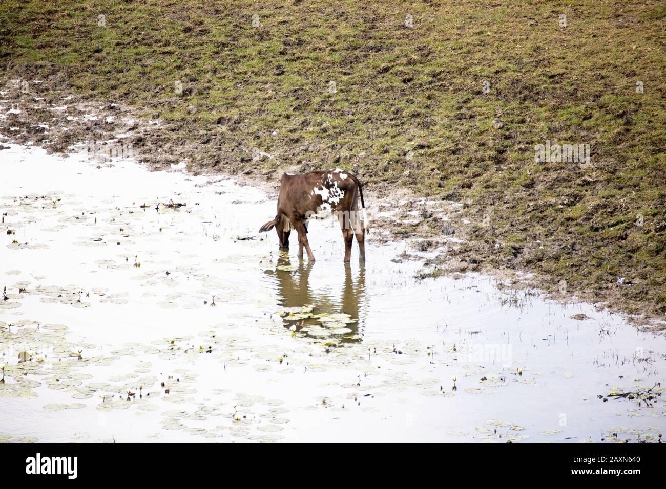 Boa Nova Bahia fonte: c8.alamy.com