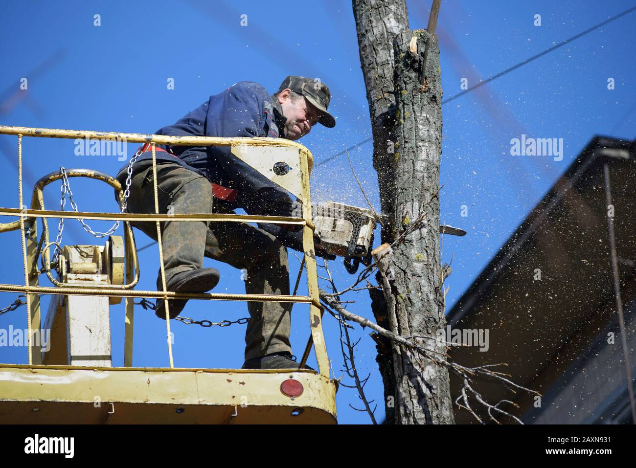 Municipal worker cutting dead standing tree with chainsaw using truck-mounted lift. February 11, 2020. Kiev, Ukraine Stock Photo