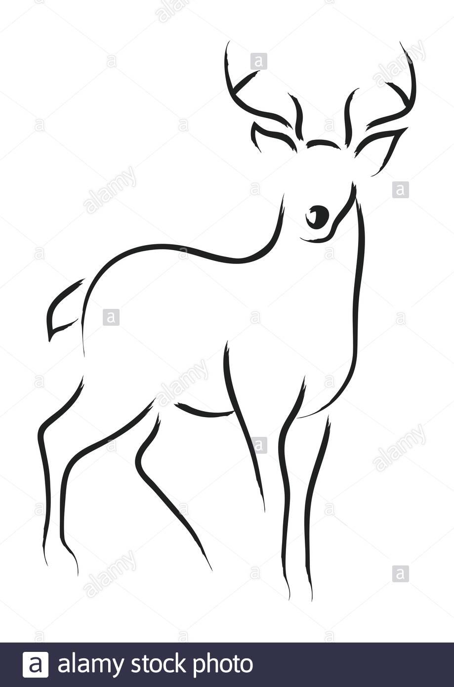 Simple Line Art Of A Deer Stock Vector Image Art Alamy