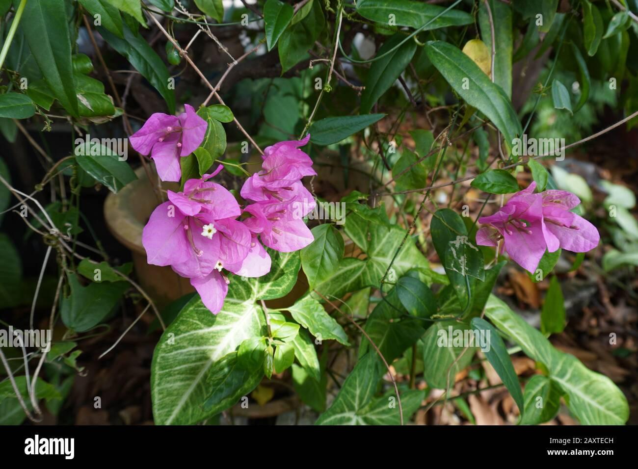 a purple flowers Stock Photo