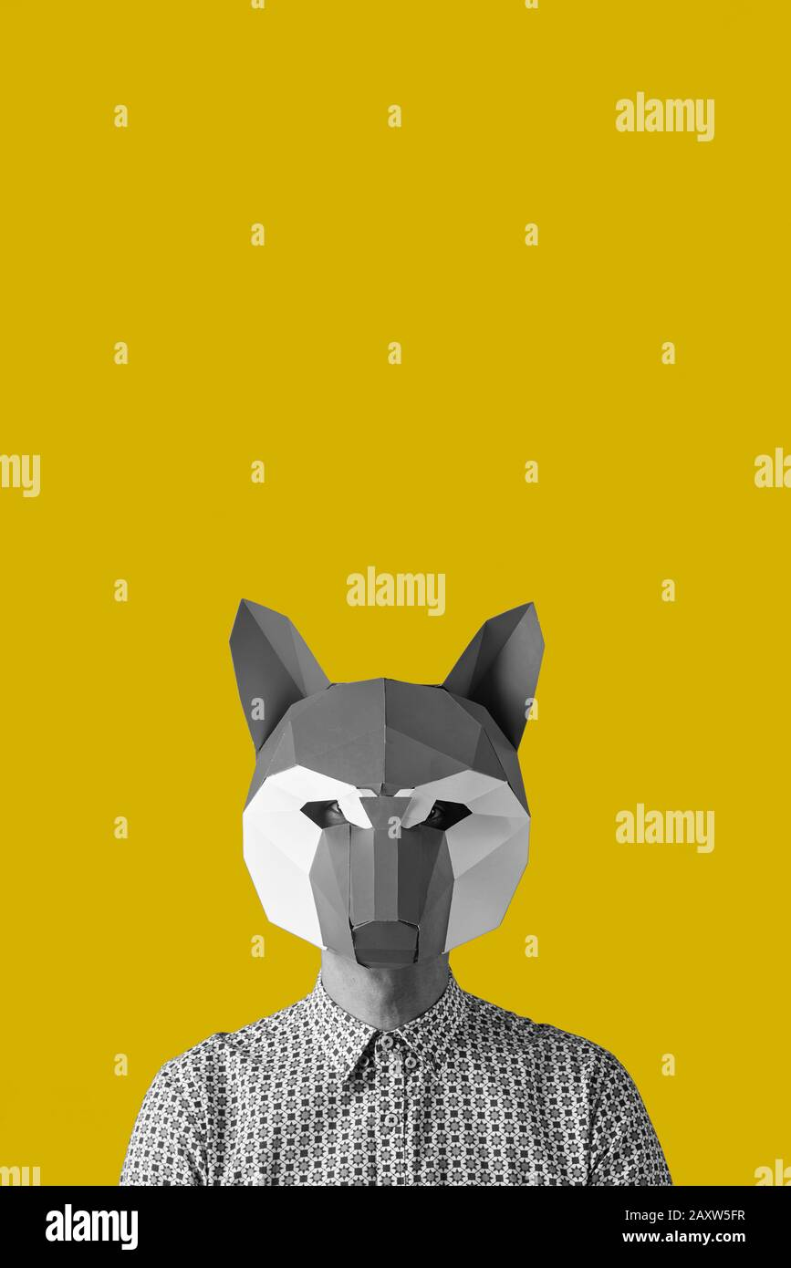 Fox Black Background High Resolution Stock Photography And Images Alamy