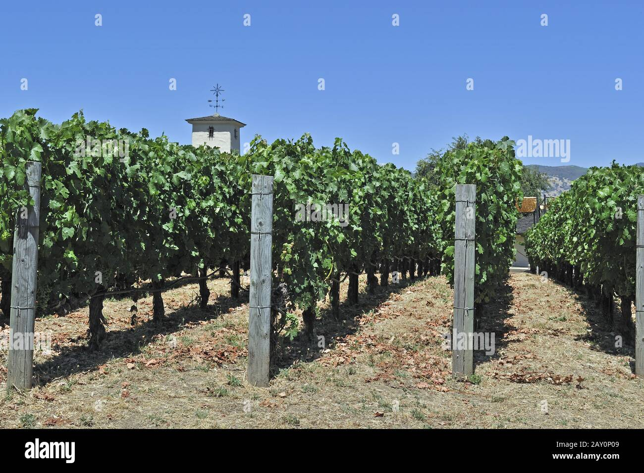 View of the vineyards of Robert Mondavi Winery, Napa Valley, Stock Photo