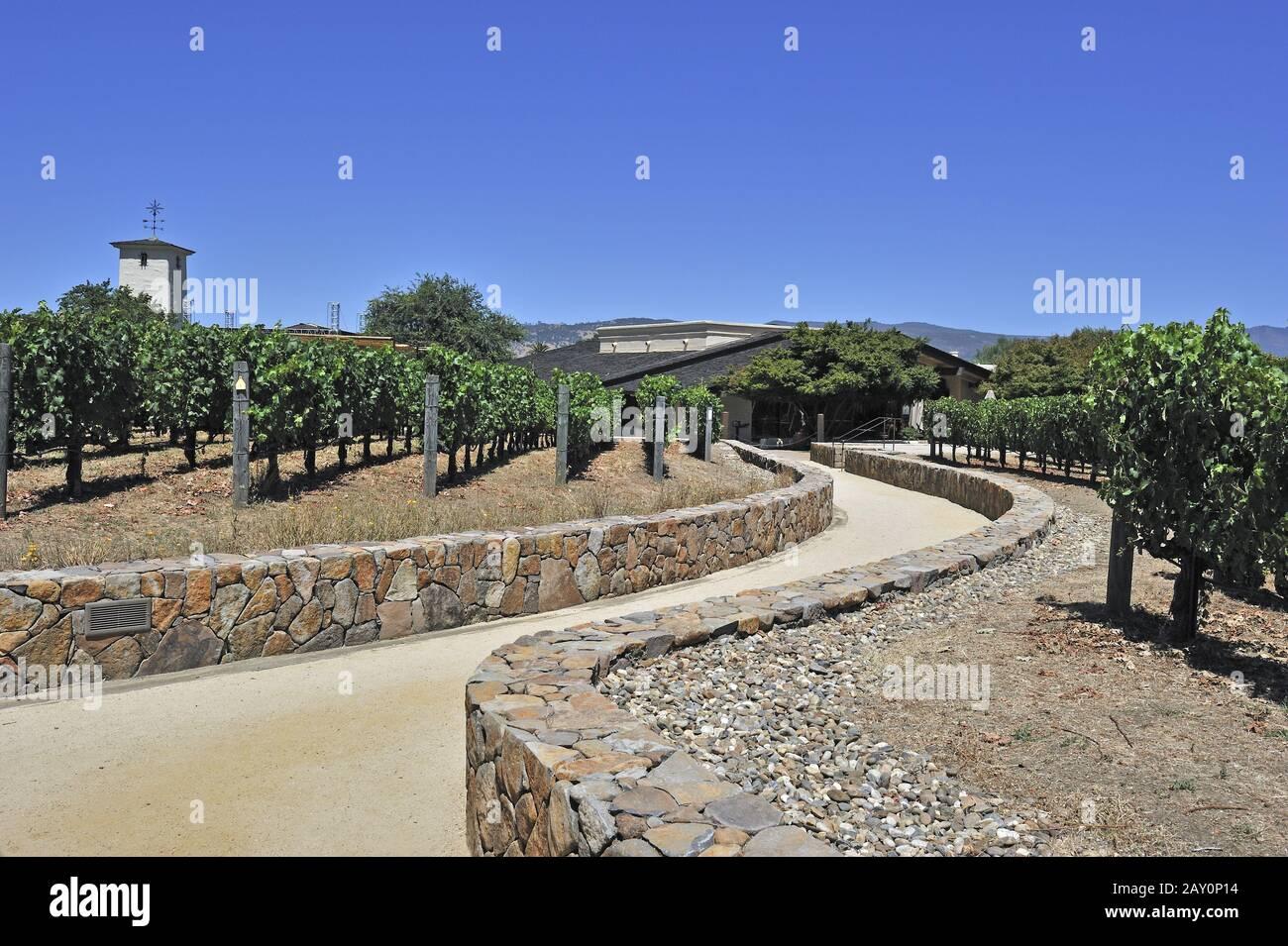 View of the vineyards of Robert Mondavi Winery, Napa Valley, Stock Photo