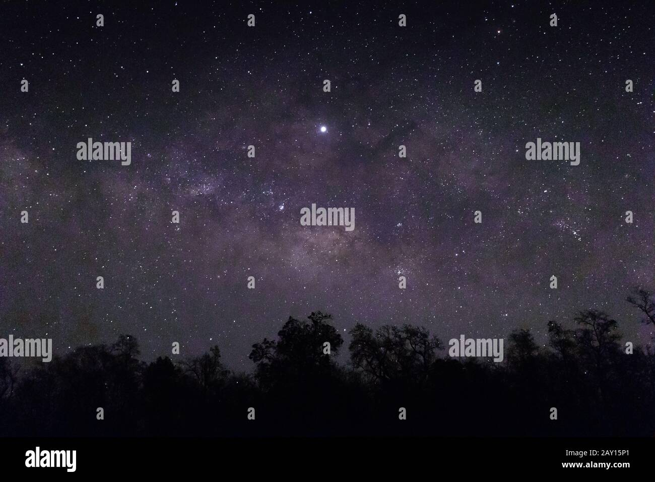 The Sky Full Of Stars And Silhouettes Of Trees Below Perfect For