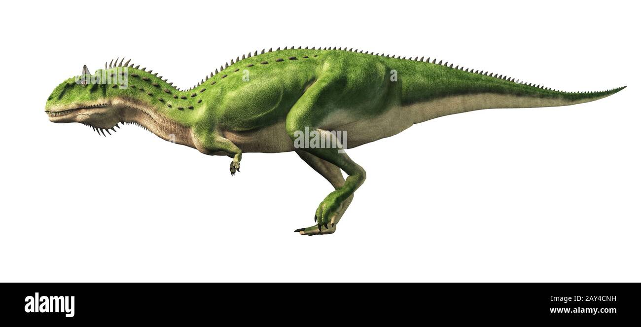 Majungasaurus was a carnivorous theropod dinosaur that lived in Cretaceous era Madagascar. A cousin species to carnotaurus, it had a horn on its head. Stock Photo