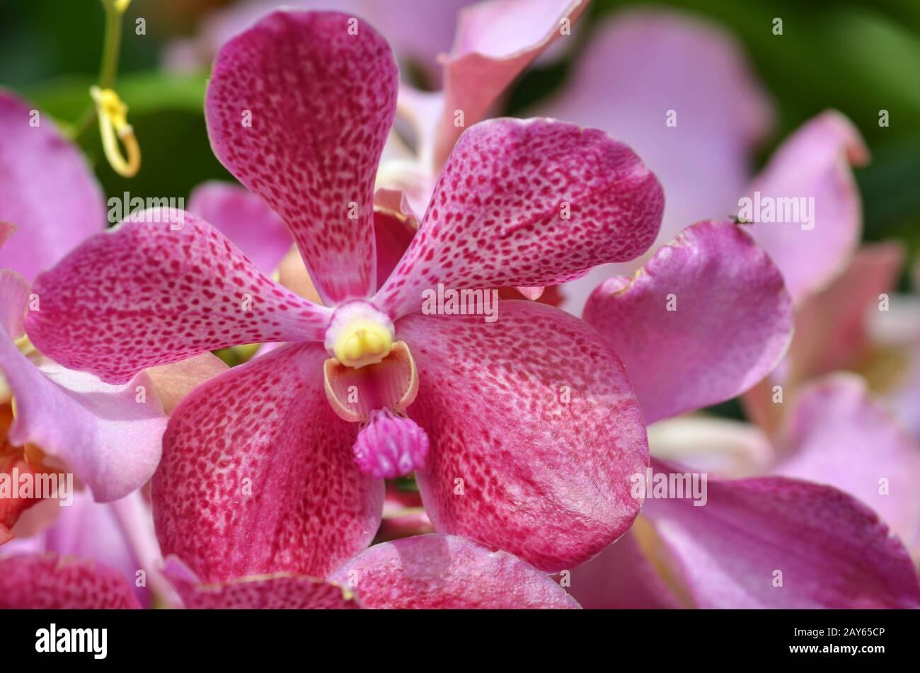 Beau /& Elliot Orchard Flower Jug