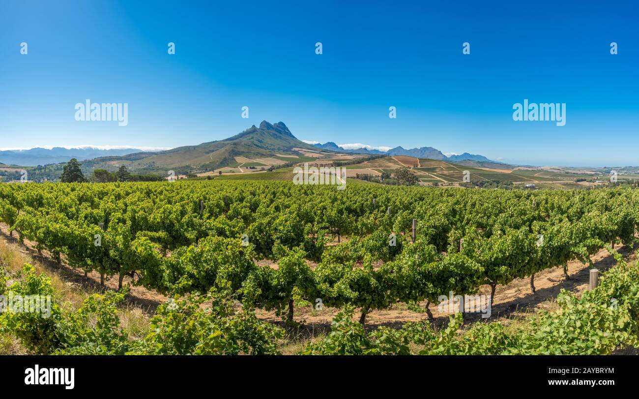 Beautiful landscape of Cape Winelands, wine growing region in South Africa Stock Photo