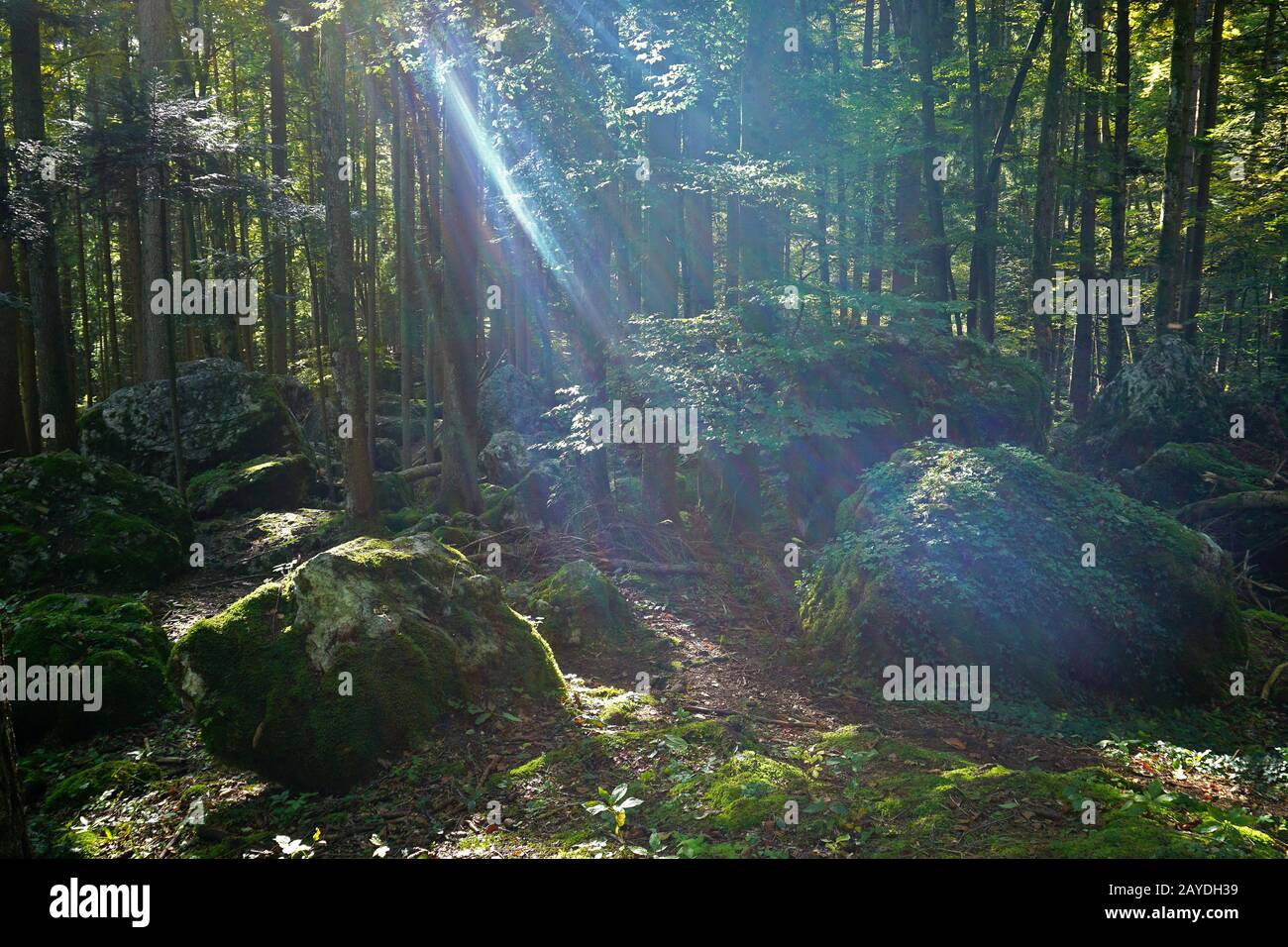 rocks in the forest on the swabian alb, germany Stock Photo