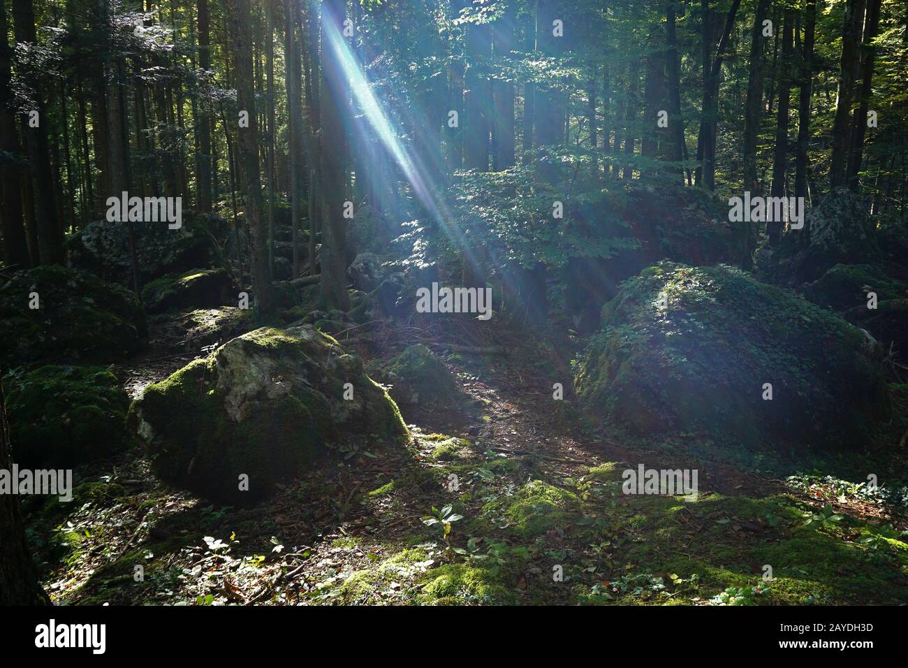 rocks in the forest on the swabian alb Stock Photo