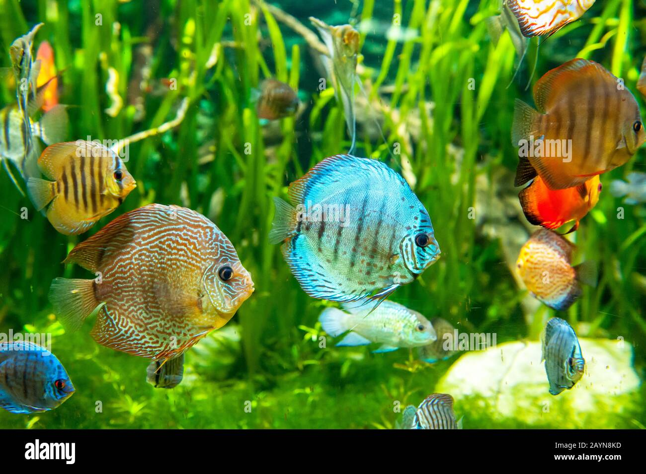 Wonderful And Beautiful Underwater World With Tropical Fishes Stock Photo Alamy