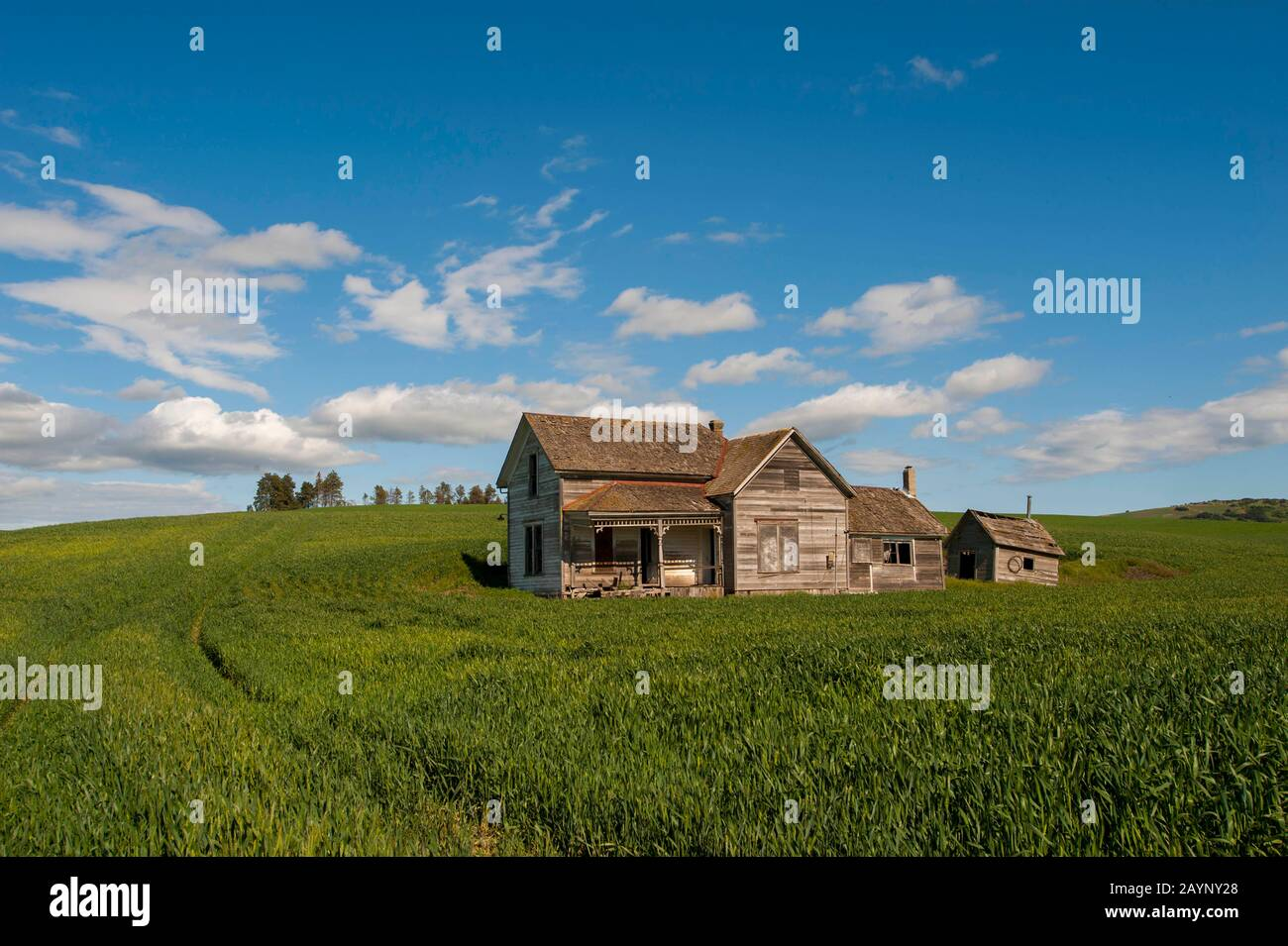 abandoned farm house weber farm in wheat field near pullman in the palouse eastern washington state usa stock photo alamy alamy