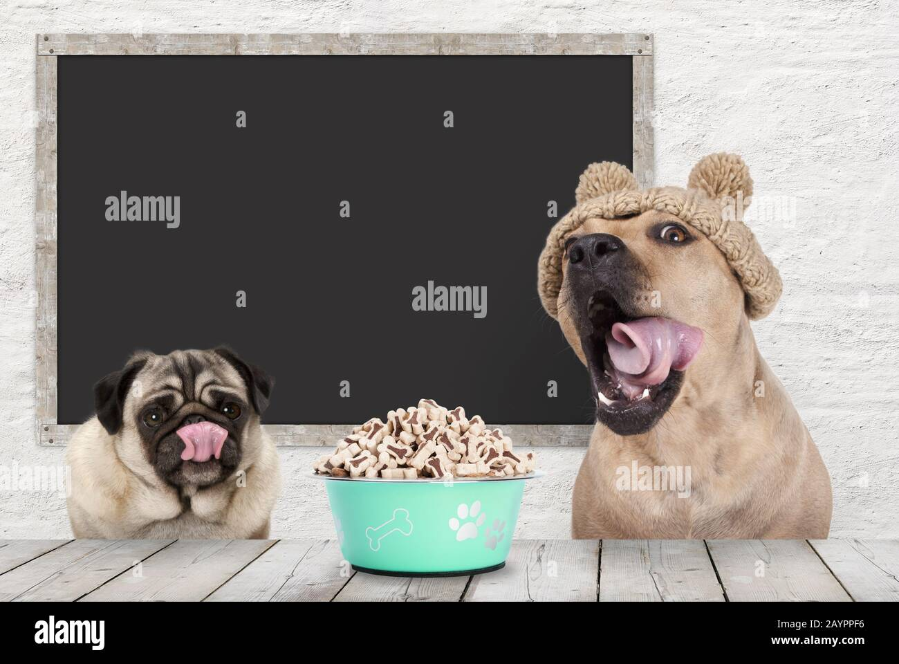 two cute dogs licking their mouth, rolling tongue, waiting for kibble treats, sitting at table, with blank blackboard in background Stock Photo