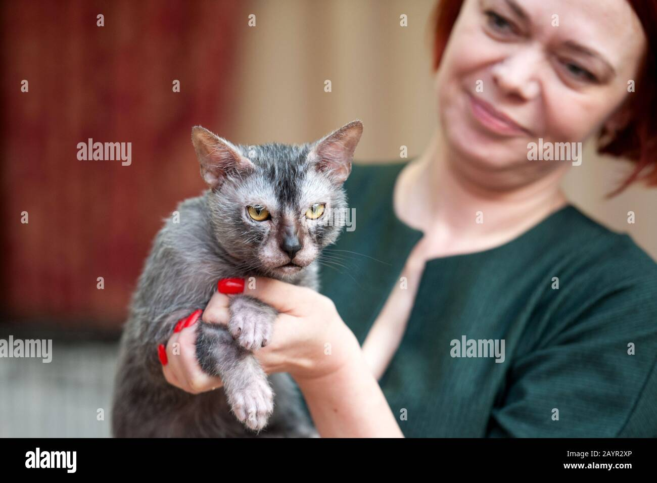 Lykoi Cat Facts What You Need To Know About These Werewolf Kitties