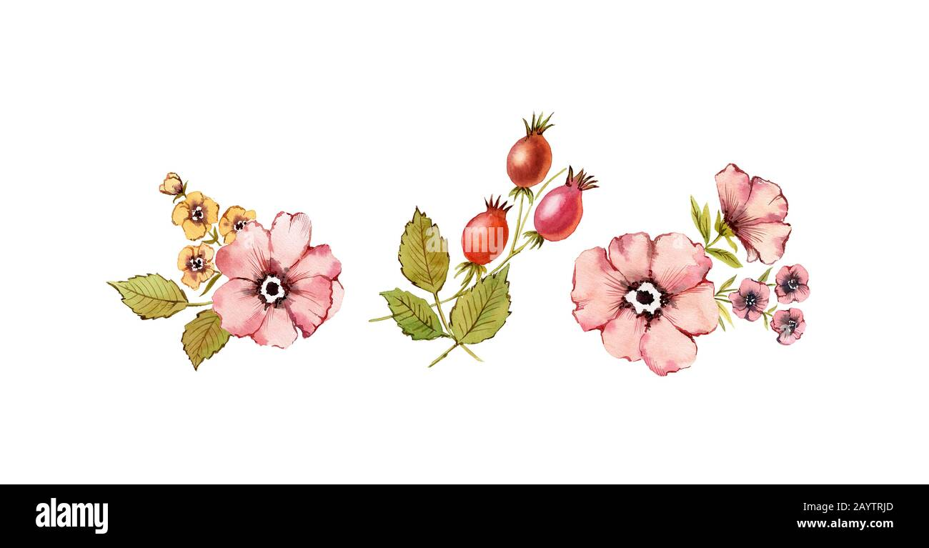 Watercolor Bouquets Set Shabby Rose Flowers Dusty Pink Briar Rose Hip Fruits Leaves Isolated On White Background Hand Painted Natural Stock Photo Alamy