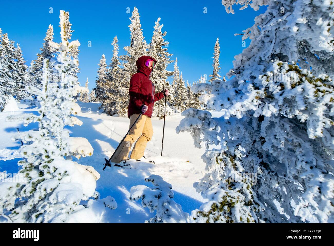 Exploring top mount and winter forest with ski touring Stock Photo