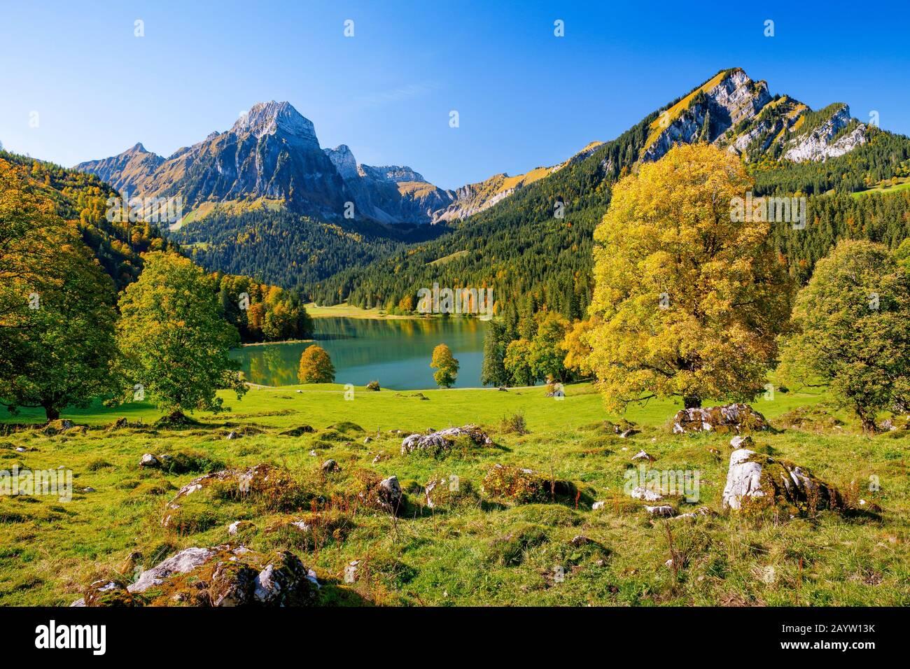 sycamore maple, great maple (Acer pseudoplatanus), lake Obersee and Bruennelistock in autumn, Switzerland, Glarner Alpen, Glarus Stock Photo