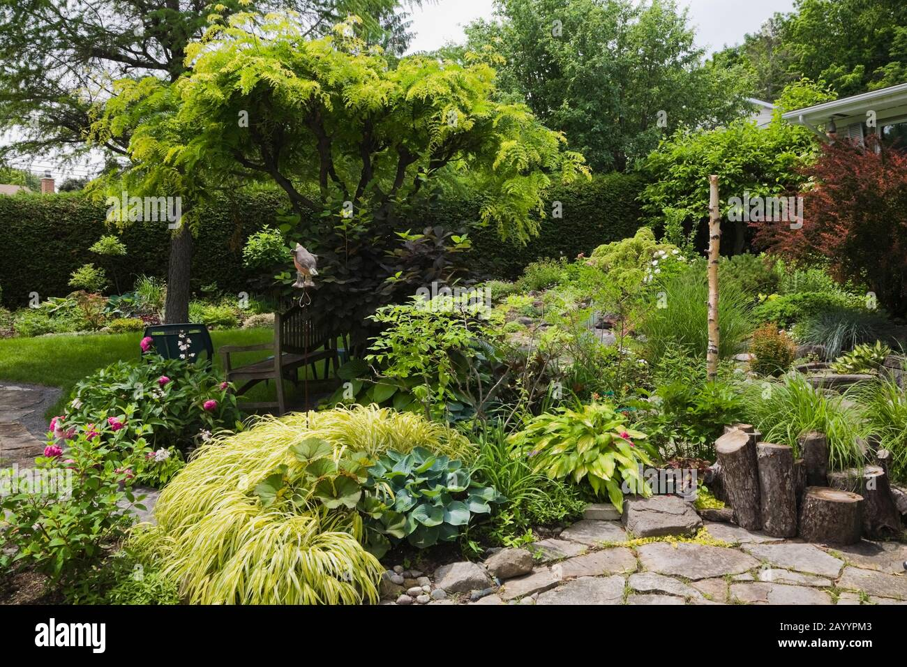 Flagstone Patio And Border With Various Plants Shrubs Trees