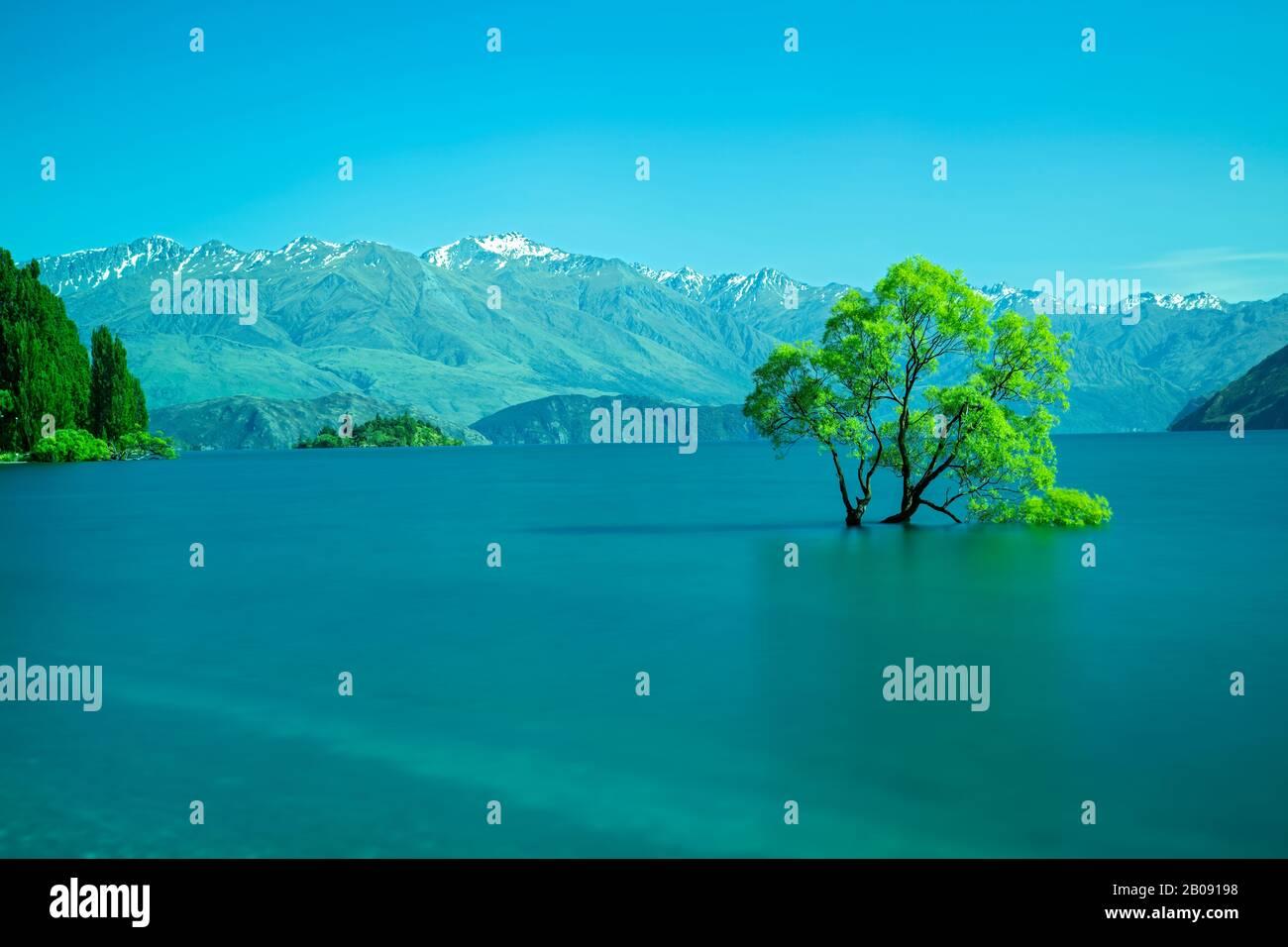 view of the famous Wanaka tree, taken with long shutter speed, in Lake Wanaka, South Island, New Zealand 29 November 2019 Stock Photo