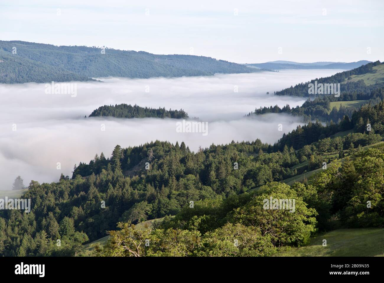Influenced by Coastal fog, filled  Redwood Creek Basin, Berry Summit, California. Stock Photo