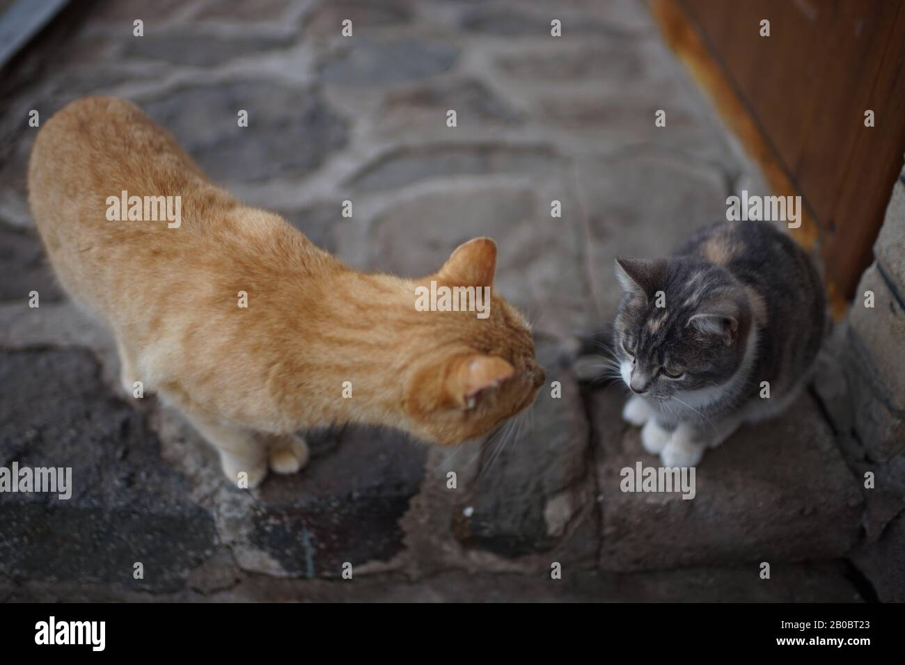 Communication of two cats in the yard. Ginger cat and young grey kitty kitten. Stock Photo