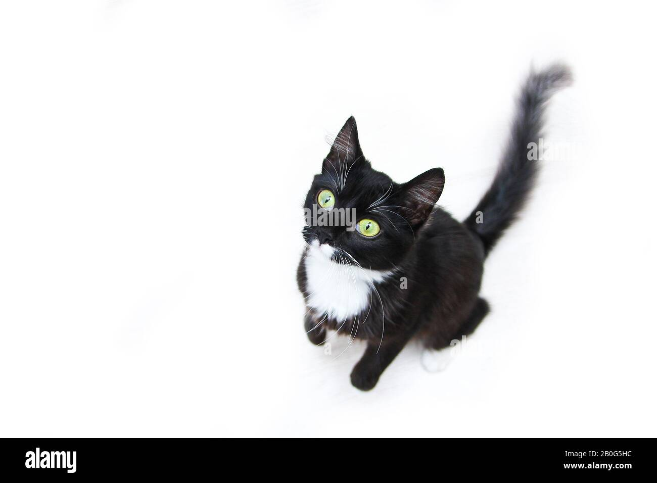 The Cute Black Cat With Green Eyes Sitting On A White Backround Looking Up Curiously Looking Cute And Happy Stock Photo Alamy