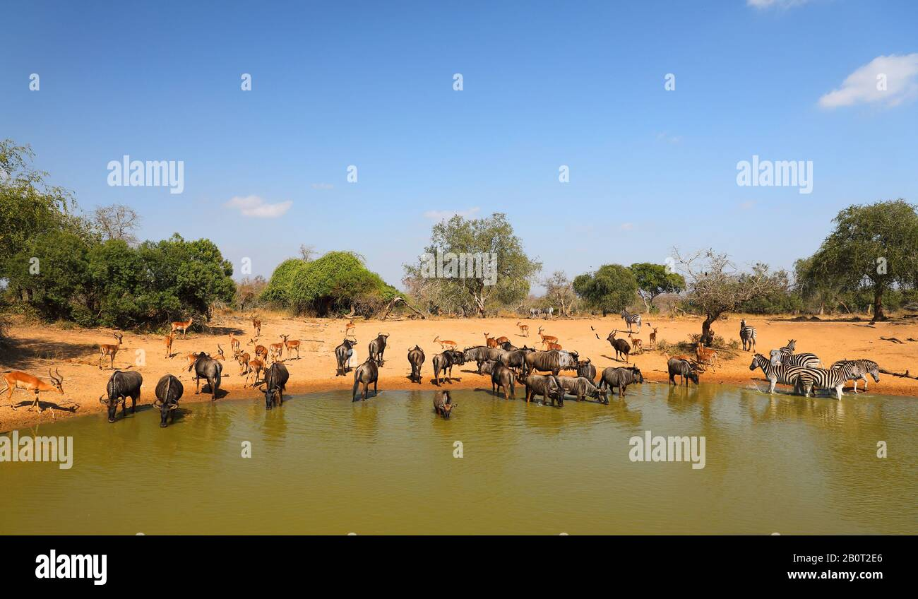 Elephant En Inde Signification sed the stock photos & sed the stock images - page 3 - alamy