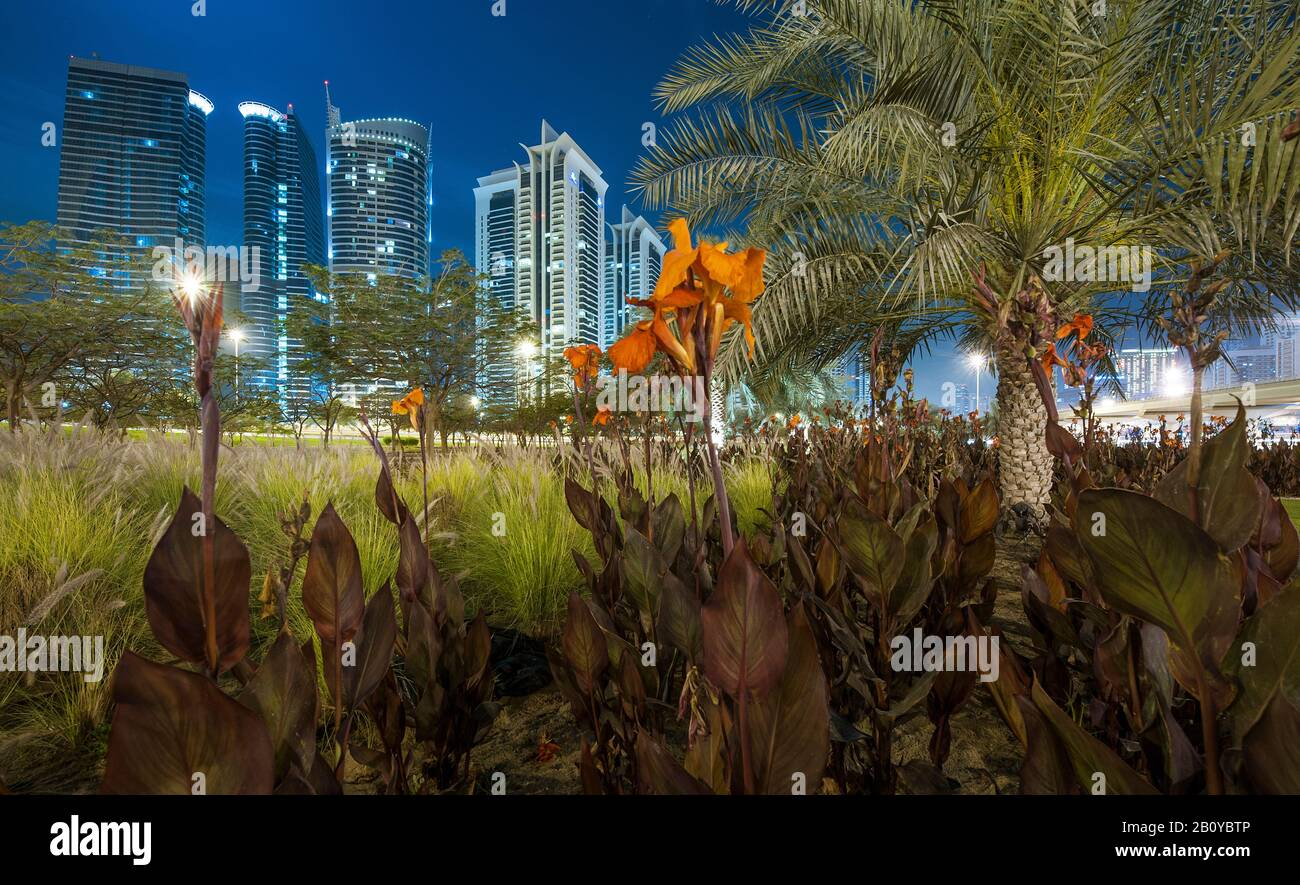 Green area with palm trees and flowers on an interchange on Sheikh Zayed Road overlooking high-rise buildings in Jumeirah Lakes Towers (JLT) at night, New Dubai, United Arab Emirates, Stock Photo