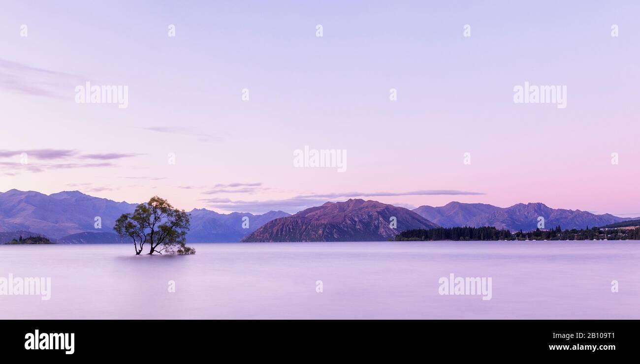 Famous Wanaka Tree At Sunset, Lake Wanaka, Otago, South Island, New Zealand Stock Photo