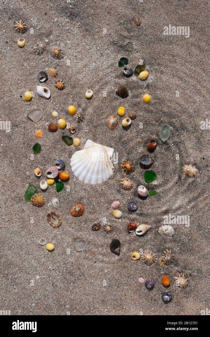 Sea shells on sand in shallow water, surface distorted by concentic ripples. Half scallop shell, winkles, top shells, limpets, and some sea glass Stock Photo