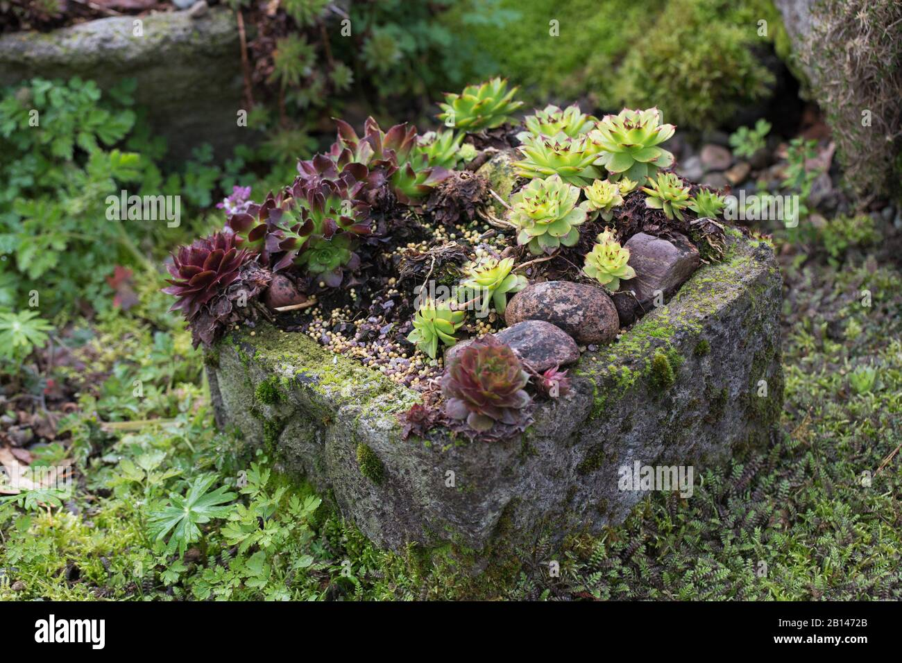 Succulents In A Cement Container Outdoors Stock Photo 344915379