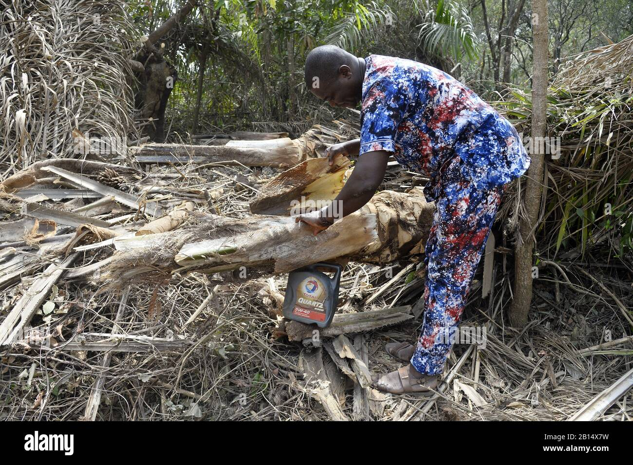 Palm Wine collect - Togo - West Africa Stock Photo