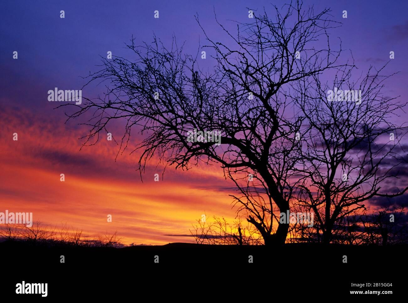 Snag sunrise, Agua Fria National Monument, Arizona Stock Photo