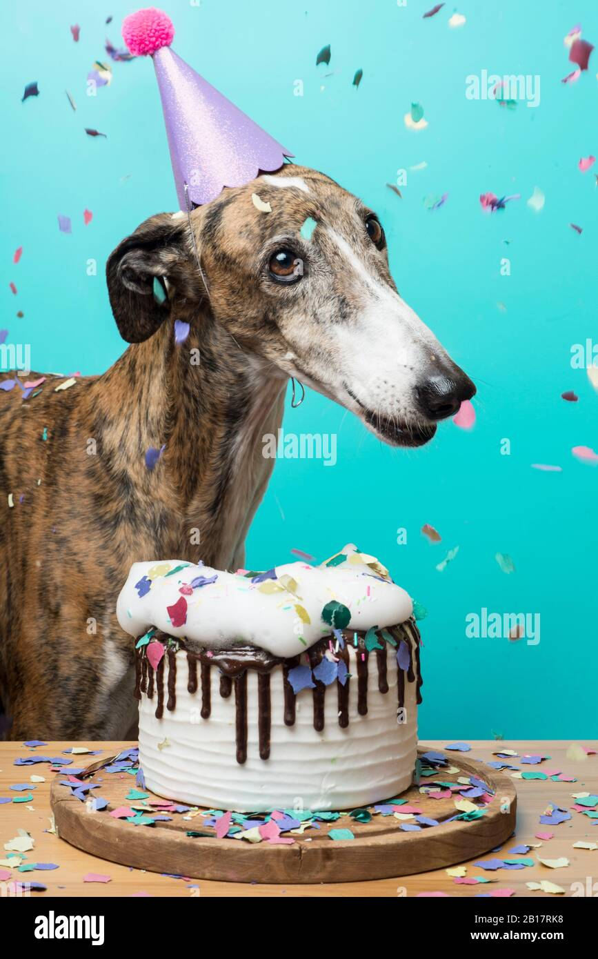 Magnificent Dog With His Birthday Cake Celebrating His Anniversary Stock Photo Personalised Birthday Cards Paralily Jamesorg