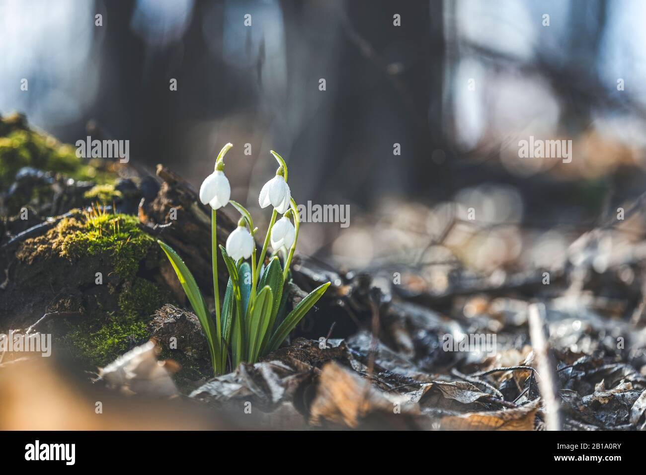 Bluebells what symbolize do Bluebell Flower