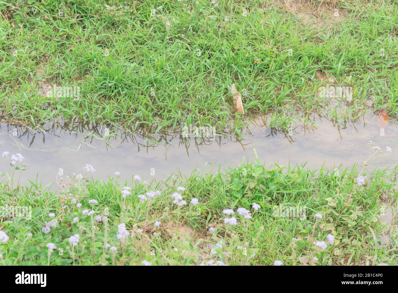 Small creek with blooming wildflower and green grass in the meadow rural North Vietnam Stock Photo