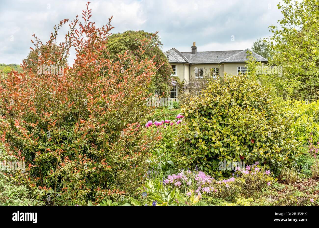 Summer Garden at the The Garden House, Yelverton, Devon, England Stock Photo