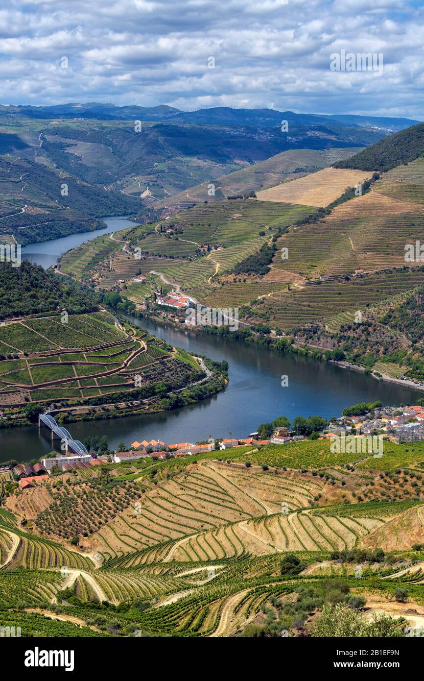 Vineyard of the Upper Douro Valley, Portugal Stock Photo