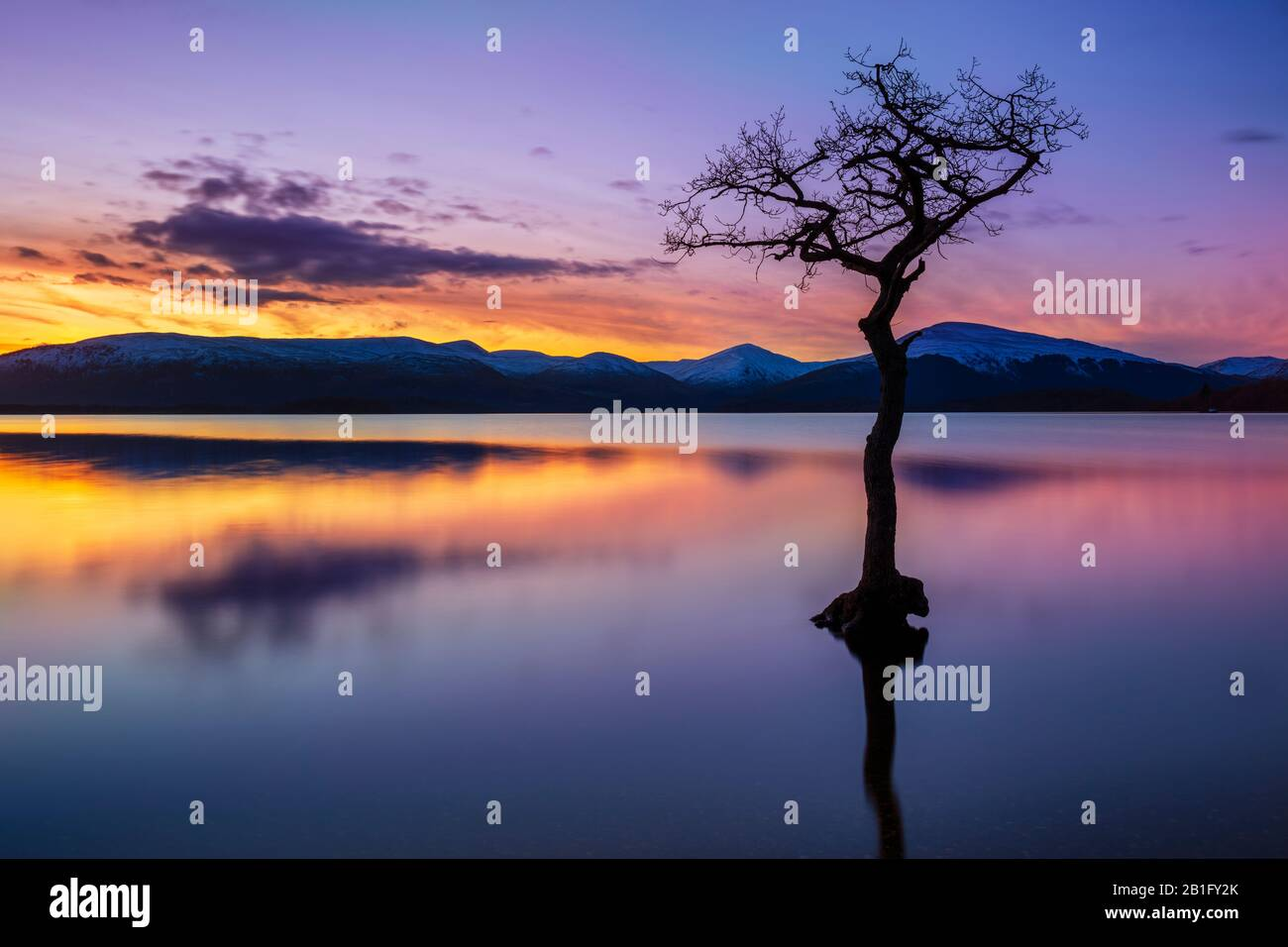 Sunset One lone tree in Milarrochy Bay Loch Lomond and the Trossachs National Park  near Balmaha Stirling Scotland UK GB Europe Stock Photo