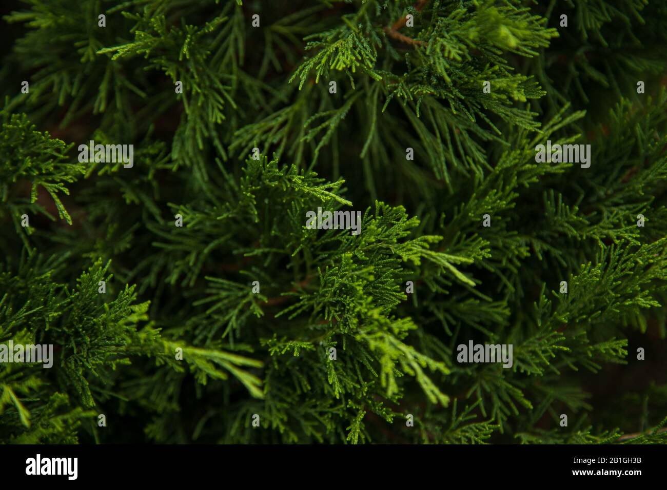 Christmas Frame On The Background Of The Christmas Tree New Year Theme Wallpaper Fo Your Device Stock Photo Alamy