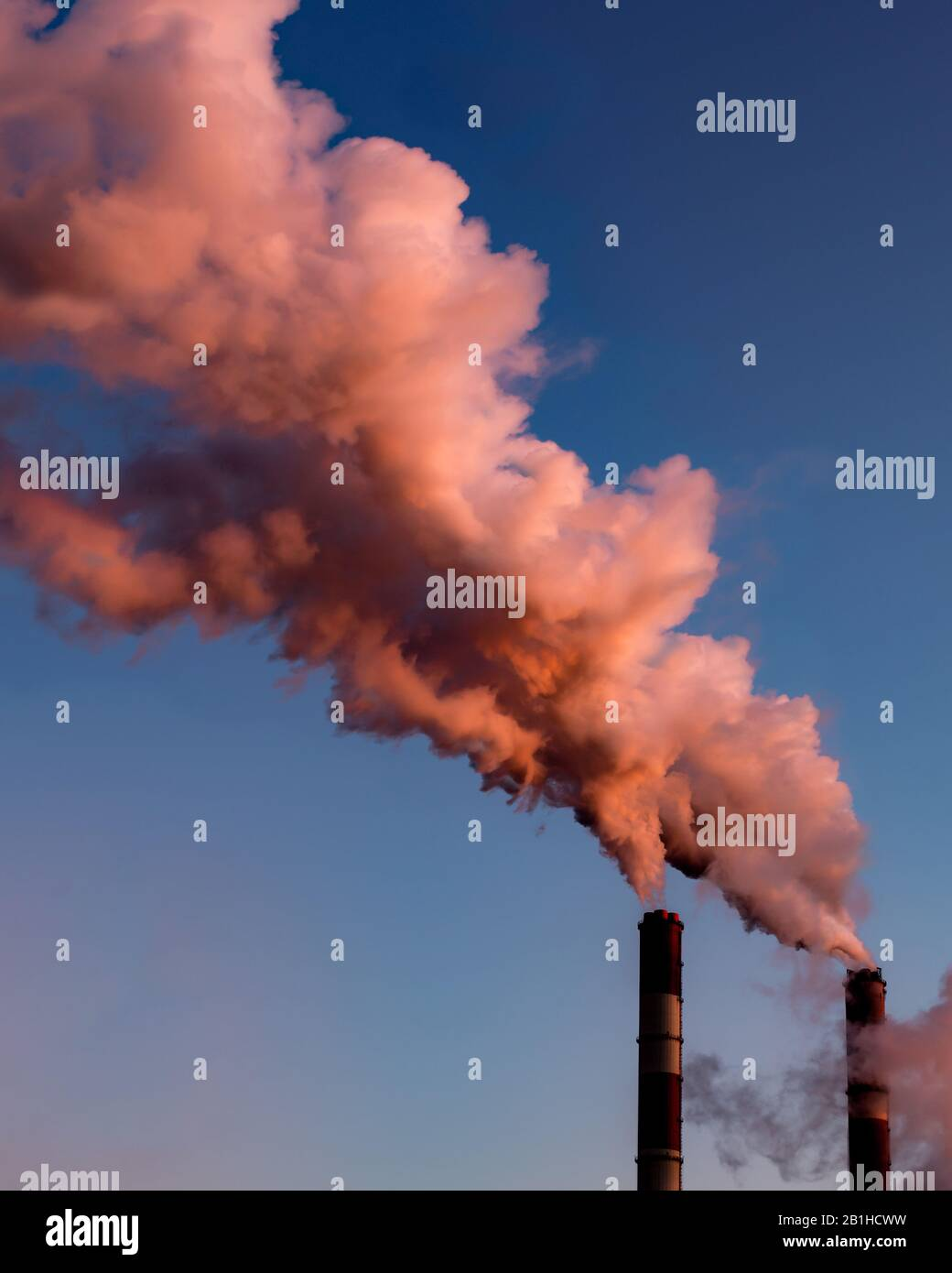 Pipes of a boiler room with thick pink smoke at sunset. Beautiful pink steam at dusk, natural tinted lighting. Air pollution, environmental problems, Stock Photo