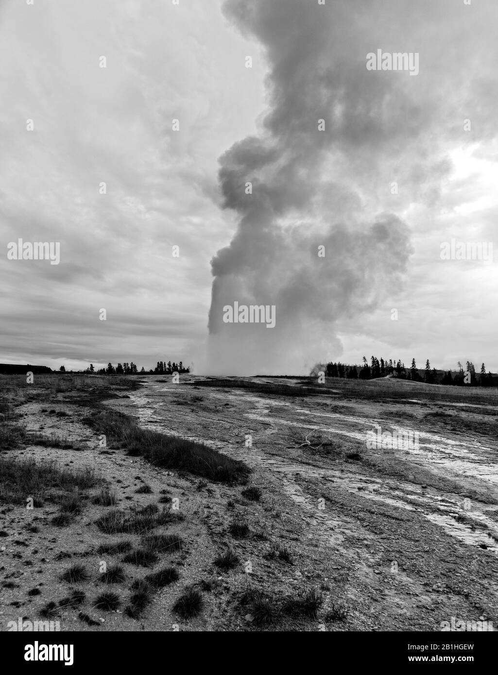 Old Faithful geyser erupting in a cloud of steam and hot water under a cloudy sky. Stock Photo